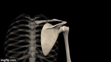 upward rotation skeletal animation